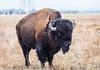 """New Buddy""Rocky Mountain Arsenal (rickoshea17) Tags: rma buffalo bald park eagle arsenal deer rockymountain"
