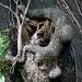 anthropology of monkey