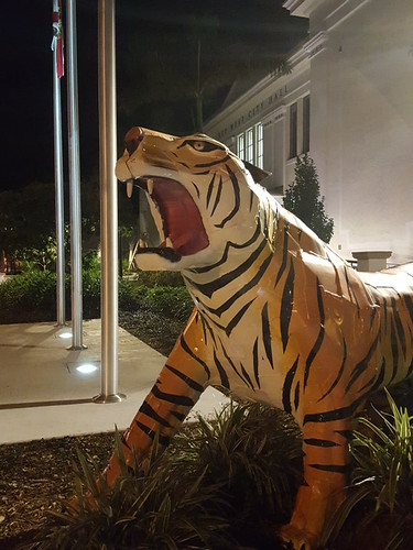 The famous Key West City Hall tiger