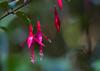 FLOR (Constantino Melo) Tags: flor florvermelha verde mata campo vermelha vermelho guara guaratinguetá brasil brazil