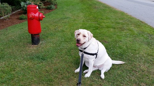 Gracie with fire hydrant