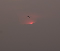 good morning everybody! (etch emm) Tags: sunrise seagull firstrays