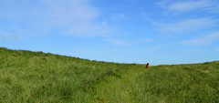 Layla .... (gutlaunefotos ☮) Tags: layla dänemark steilküste nordjütland