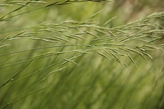 Breeze (lucherinimartina) Tags: green nature field wind windy breeze monocrome mocromo onlygreen