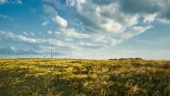 Sommerspaziergang (stefandinkel) Tags: field landscape fuji blusky x100 stefandinkel