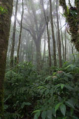 Cloudforest, Level I