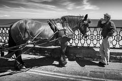 Old Faithful (shotbywiles) Tags: street sea vacation horse holiday beach coast seaside nikon tour streetphotography wie coastal promenade cobbles pembrokeshire tenby seas seasideresort horseandcarriage britishseaside horseandcart wiles streetphotographer d600 cobbledstreet carthorse wilesphotographycom wilesstreetphotographer wilesstreetphotography