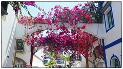 (Mateusz Mathi) Tags: summer flower de puerto spain mini lg gran g2 canaria mogan kwiaty mateusz 2015 mogn mathi hiszpania wyspy kanaryjskie