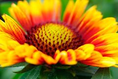 BoomPop1 (xk8jag2000) Tags: flowers colorfull wowiekazowie