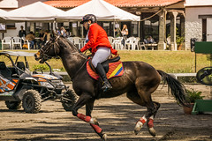 speed up (ands91) Tags: caballo jinete montura competencia pasto equipo elcortijo guatemala horse rider saddle competition pasture gear equusferuscaballus galope gallop