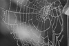 Charlotte's Web (Kraf T Photography) Tags: dew web spiders spidersweb morningdew water droplet waterdroplet