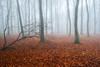 The Fallen (jactoll) Tags: cutsdean gloucestershire cotswolds fog foggy mist misty forest trees woods light mood landscape appicoftheweek sony a7ii zeiss 1635mmf4 jactoll