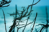seabranches (lau7171) Tags: coast half moon bay sea branches twigs nature