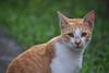 Cat (Debatra) Tags: calcutta kolkata india westbengal bengal easternindia cat nikon nikkor d3300
