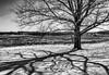 Winter's Shadow (Charles Ragucci Photography) Tags: shadow january darkshadow charlesragucci landscape blackandwhite baretree winterice outdoor snowing snow valleyforgepark cold