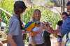 _J9A6827 (Noel Roberts) Tags: birds maleny aviary birdlife birdie birdwatching birdcage birdphotography featheredfriends bird worldcuteflightfeatherbirdswildlifeparrotafrican grey parrotgolden chinese pheasantpheasantcolourfulbeautifulmaleny botanic gardensbotanicgardenscockatooblack cockatooredtailedindian ringneck parrot budgie