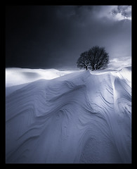 Sculpted by the wind (Laura Dryden) Tags: snow winter sheffield peakdistrictnationalpark southyorkshire england uk 1740mmf4l canon eos5dmarkii blackwhite monochrome sastrugi march2013 lonetree stormlight 45 niksoftware silverefexpro