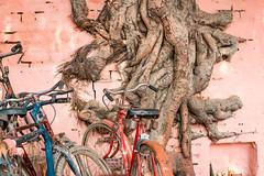 _DSC0752 (Amritendu Das) Tags: devdeepawali varanasi banarascolor culture deepawali festival ganga incredibleindia india kashi ritual travel utterpredesh uttarpradesh in