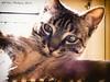 Hodor (vicroga2115) Tags: gatos toledo casero animales sol hodor