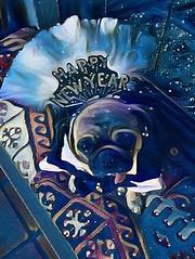 """Forgets da foodie coma and da champughangovers.🎉I'ms watchin fireworks 💥 and wishing everybodys Happy New Year!🎊"" Pugsley Luigi  #pug #happynewyear #fireworks #dog #newyearseve #celebration #pugs #celebrate #dogs (TheZenOfPugsleyLuigi) Tags: pug happynewyear fireworks dog newyearseve celebration pugs celebrate dogs"