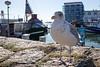 SeagullClosup || Rügen (BX_Orange) Tags: rügen deutschland germany sassnitz möve seagull hafen harbour closeup nahaufnahme wideangle