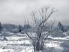 Hohes Venn / Eifel (www.creativ-pool.net) Tags: clouds wolken landscape landschaft outdoor nature natur photographietoporowski olympus esystem e30 germany deutschland winter schnee snow cold kalt eifel monschau belgium belgien venn