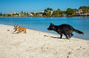 IMG_1882 (megscapturedtreasures) Tags: ammo sun sunset dog beach dogs ruff days daycare