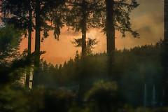 Foggy evening on the island (Sara Gray Photography) Tags: bainbridgeisland seattle texture textures topazlabs topazimpression photoshop photomanipulation trees sunset digitalart photoart