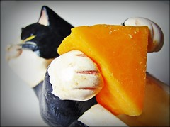 Macro Monday: Cheese (Daryll90ca) Tags: cat cheese macromonday