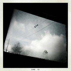 Like a Bird on a Wire... (soilse) Tags: trees ireland winter window rain birds clouds square cloudy january pole cables squareformat raindrops perched ornithology donegal 2012 iphone perching gaothdobhair tírchonaill iphonecamera iphoneapp crainn january2012 hipstamatic hipstamaticapp eanáir hipstamaticcamera birdsonawirethreebirds éanacha