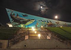 Newport Aquarium (.annajane) Tags: longexposure sky cloud moon fish wall night painting aquarium shark mural turtle kentucky newport