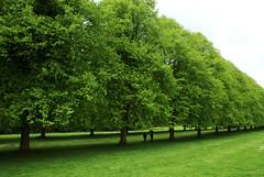 DSC06230 (Matteo Bersani) Tags: trees ireland verde green alberi prato a100 irlanda passeggiata viale camminare sonyalphaitalia