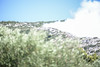 GREECE-SOCIETY-WILDFIRE (X-Andra) Tags: summer forest landscape fire greece burning wildfire catastrophy bushfire attica grc attika kareas ymittos ilioupolis