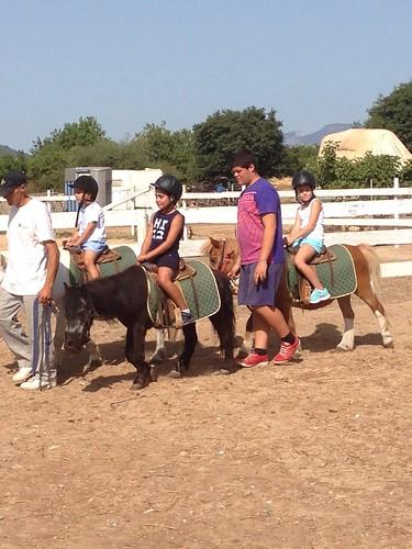Horses_The Paula Method_12