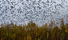 Birds by Hitchcock (kud4ipad) Tags: autumn sky field birds forest lviv осень природа птицы 2013 львов хичкок 5star28mm