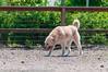 _DSC2982.jpg (orig_lowolf) Tags: usa dog oregon nikon flickr dogpark lakeoswego d300s sigmaaf150500mmf563apodgoshsm