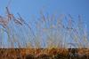 150703 mhcN 150716 © Théthi ( explore ) (thethi: pls read the 1st comment :-)) Tags: nature herbe sauvage campagne mur ciel été namur wallonie belgique inthesky setnamurcity rubyinv bestof2015 setvegetaux faves43 setjuillet