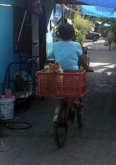 biking for mom?