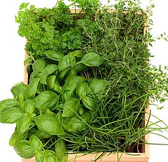 AMAWX2 (thefairkitchen) Tags: life wood people stilllife food plants white plant flower green kitchen leaves cutout out person one photo leaf still healthy shot herbs drink photos shots box cut no background interior grow indoor nobody fresh pot indoors growth drinks basil boxes growing cutouts choice parsley without herb thyme stills basilicum potted stilllifes lifes choose alimentation freshness nutrition choosing kitchenitems interiour thymus frizzy ocimum essentialkitchenitems kitchentips