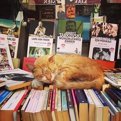 Sweet sleep #stray #straycat #cats #catsofinstagram #Tophane #Cukurcuma #Istanbul #thisismycity (SRende) Tags: square squareformat mayfair iphoneography instagramapp uploaded:by=instagram