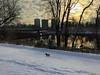 Sun rising (lezumbalaberenjena) Tags: winter hiver invierno frio cold froid nieve niege snow white blanco blanca blanc blanche ottawa rideau river trail 2016 december diciembre decembre dog perro chien chiot boston terrier bully
