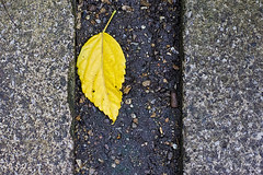 'Y' for yellow (plw1053) Tags: plw1053 paullgwells foliage yellow y flickbar flickrbar challenge alphabet az abstract pavement ground grit texture seasons autumn leaf colour lines