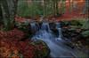 El bosque (antoniocamero21) Tags: paisaje amanecer rio agua arroyo bosque hayas árboles hojas invierno color foto sony montseny natural parc barcelona catalunya