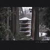 室生寺 五重塔 (Eiji Murakami) Tags: japan nara winter sigma dp1 merrill foveon 日本 奈良 冬 室生寺 フォビオン