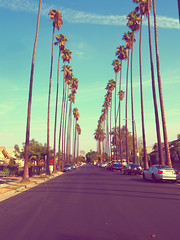 PB16060122 (mina_371001) Tags: america losangels california trip sky parmtree cars olympusomdem10 photographywork