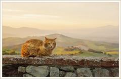 """Un simpatico """"micione"""" (robertar.) Tags: landscape tuscany animals animali panorama gatti cats borghitoscani"""