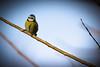 Resting On A Branch (jamesromanl17) Tags: bird nature branch natural rest canon light world photograph pics