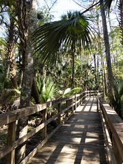 Ocala, FL, Silver Springs State Park, Swamp Boardwalk (Mary Warren (8.7+ Million Views)) Tags: ocalafl silverspringsstatepark swam boardwalk wood landscape