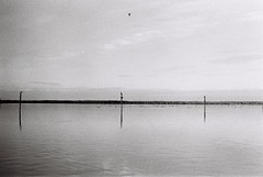 film (· F E R ·) Tags: film filmisnotdead 35mm pentax pentaxk1000 analogue fotografíaanáloga analog análoga bw blackwhite bandw spain valencia albufera