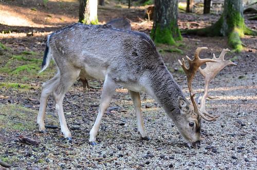 Wildpark Hufeisen
